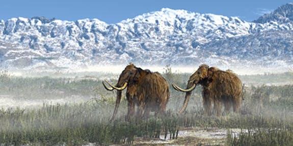 Museum of Idaho, Mammoth, mountain